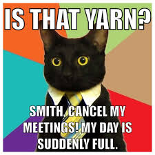 Business Cat Memes - 319 best business cat images on pinterest funny kitties black