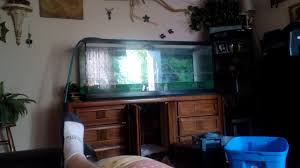 Kijiji Kitchener Waterloo Furniture Turtle Tank New U0026 Used Pet Accessories In Ontario Kijiji