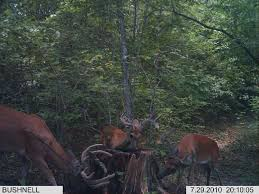 minerals are for trail cameras not antlers deer pros