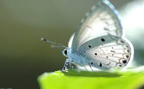 butterfly backgrounds free download page 3 of 3 wallpaper wiki