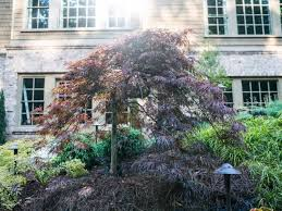choose the best small trees diy