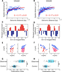 spatial organization of chromatin domains and compartments in