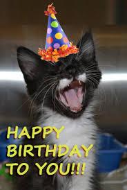 singing birthday birthday paw ties pawmettolifeline org
