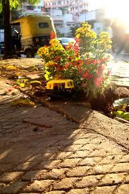 gardening picture gardening in india u2014 the pothole gardener