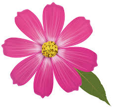 pink flower pink flower png clipart best web clipart