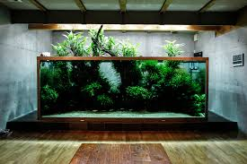 amano aquascape l aquarium particulier de takashi amano le journal de l aquascaping