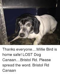 Lost Dog Meme - thanks everyonemillie bird is home safe lost dog canaanbristol rd
