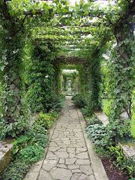 pergola with climbing plants pergola with vines gallery ahigo