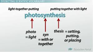 what is the latin root meaning light science vocabulary concepts study skills word parts video