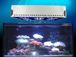 led aquarium lights for reef tanks 13 best aquarium images on pinterest aquariums fish aquariums and