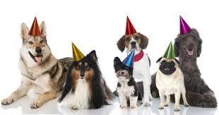 dog birthday party bears dog birthday