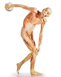 Human Anatomy Full Body Picture Discovery Science Place Bodies Human Anatomy In Motion