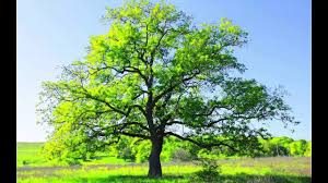 most beautiful nature scenes ever green amazing natural world
