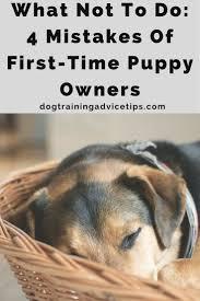 best 25 pet store puppies ideas on pinterest pet shop puppy