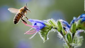 How To Save A Dying Plant 5 Ways To Help Save The Bees Cnn