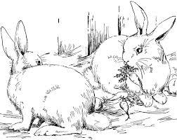 coloring pages animals peter rabbit cottontail glum