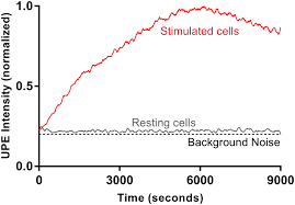 a representative upe profile of hl 60 cells in resting state and upon