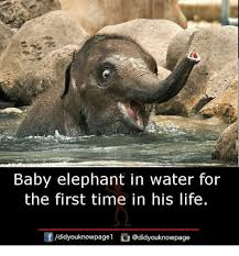 Elephant Meme - baby elephant in water for the first time in his life life meme on