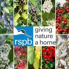 planting a native hedge rspb approved bird friendly hedges ultimate bird friendly hedging