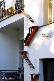 leiter f r treppe hauskatze katze leiter treppe