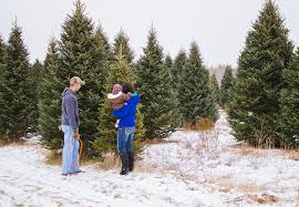 where you can cut your own christmas tree in nh