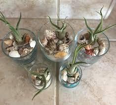 diy beachy air plant terrarium