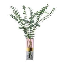 Plant Vase Best 25 Interior Plants Ideas On Pinterest House Plants Plant