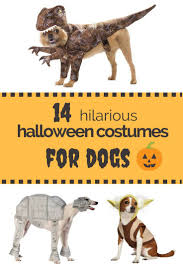 cerberus 3 headed dog spirit halloween 8 best dog costumes images on pinterest halloween ideas