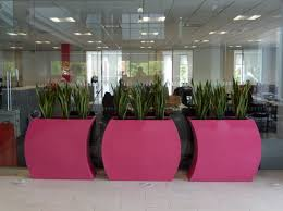 Office Pots by Office Breakout Area With Curvy Trough Plant Displays Reception