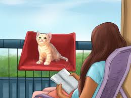 How To Make Patio Doors More Secure by How To Make A Balcony Safe For Cats 10 Steps With Pictures