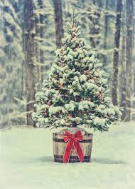 snowy christmas pictures snowy christmas tree with colorful lights in a forest vintage