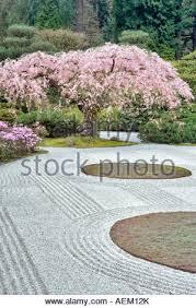 Flowering Cherry Shrub - flowering cherry tree and purple azaleas japanese gardens portland