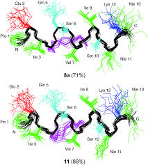 comparison of hydrocarbon and lactam bridged cyclic peptides as