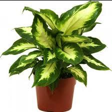 Indoor Home Decor The Coolest Indoor Plants Quora