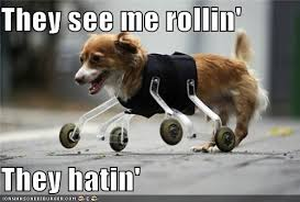 They See Me Rollin They Hatin Meme - they see me rollin they hatin i has a hotdog dog pictures