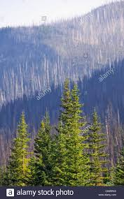 Wildfire Kootenays by Forest Renewal After 2003 Kootenay Wildfires Evidence Of