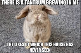 Tantrum Meme - rabbit ramblings bunny monday meme day tantrum