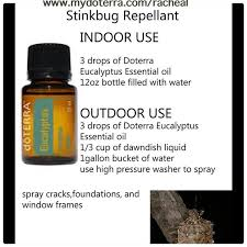 best 25 stink bug smell ideas on pinterest green stink bug