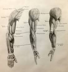 interesting anatomy topics image collections learn human anatomy
