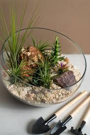 diy terrarium premium kit by floral garage everything u0026 anything