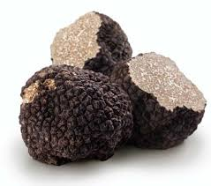 where can you buy truffles how to grow truffles in the united states farm and garden grit