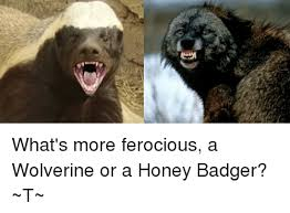 Honey Badger Meme - what s more ferocious a wolverine or a honey badger t meme on me me