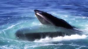 national geographic giants of the deep ocean full hd