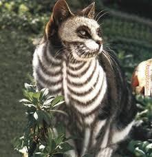 Cool Cat Halloween Costume Cat Memes Ready Halloween Cat Memes Memes