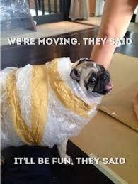 Moving Meme - 19 best moving house memes images on pinterest moving house e