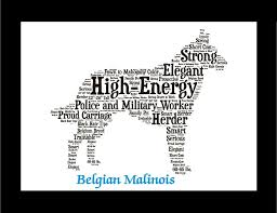 belgian sheepdog guard dog belgian malinois belgian malinois history and dog