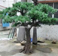 q083105 large outdoor bonsai trees ornamental foliage plants