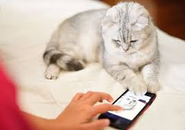 Bed Bugs On Cats Why Cats Love Phones Jealous Behavior