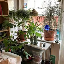 the livingroom window thoughts u2013 nini u0027s scattered thoughts