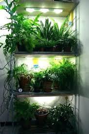 what is the best lighting for growing indoor grow lights for indoor plants growing plants indoors grow